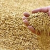 Vetés a tudati, aratás a fizikai világban